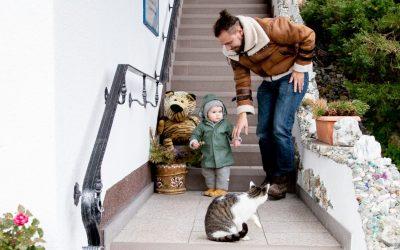 9 Best Baby Gates for Stairs & Doorways in 2020
